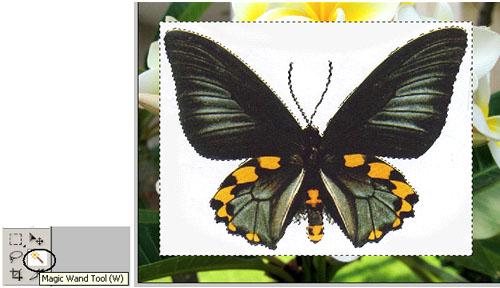 Hapus Background gambar kupu-kupu menggunakan Magic Wand Tool Karena ...